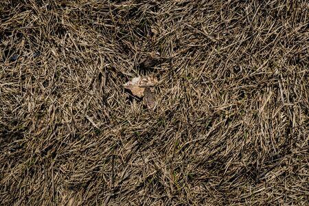 Texture of withered grass. Lifeless background image. Siberian soil. Macro photo. Фото со стока