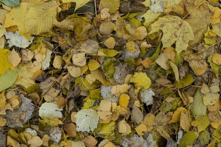 The texture of autumn foliage. Background image of yellow leaves. Graphic resources abstract textured background of autumn foliage on the ground in a park.