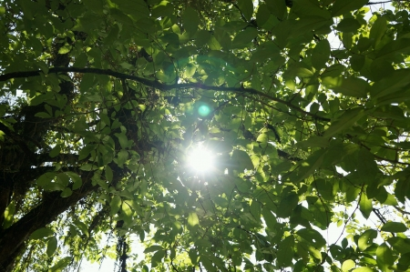 treetops: Sunlight pass through treetops