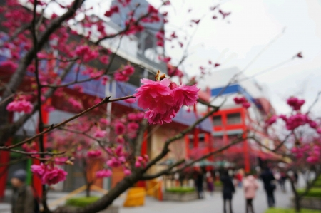 Pink flower bloom during winter with selective focus