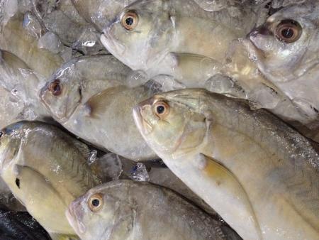 pile of fresh fish in the market Archivio Fotografico