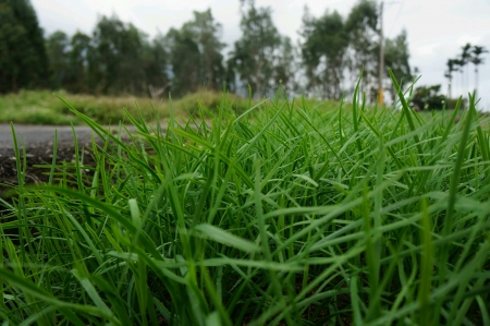 Close up view of green grasses beside the road