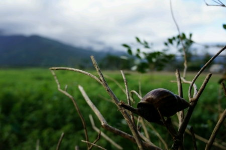 A snail climbing a tree branch with selective focus