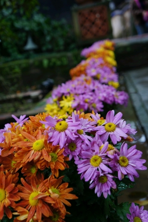Flower in a garden with selective focus