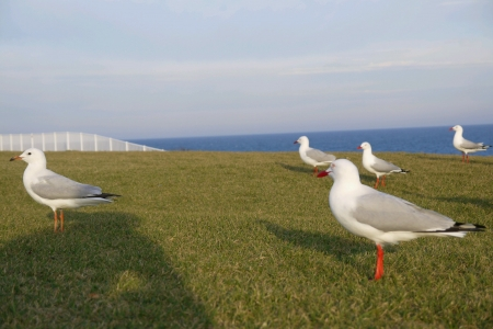 Seagulls standing on grass field