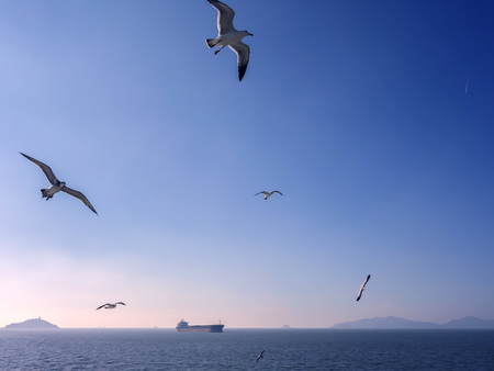 Seagulls on the sea, under the blue sky
