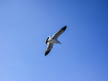 Seagulls on the sea, under the blue sky 版權商用圖片 - 121080458