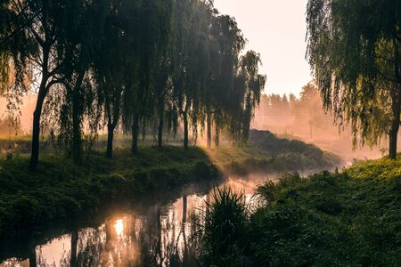 the rising sun shines in the trees beside the river. Banco de Imagens