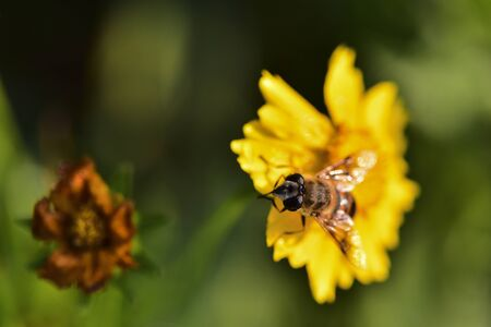Close-ups of different insects inhabiting wild plants