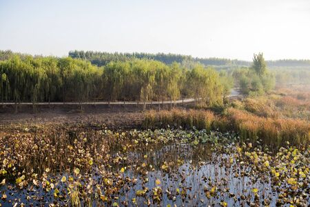 A view of the lotus pond under the early morning fog Фото со стока