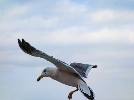 Seagulls are flying freely in the cloudy sky.