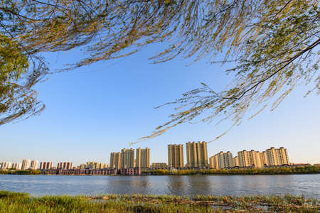 Waterfront skyline and sprouting willow branches in spring