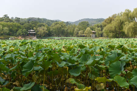 Beautiful lotus pond in Chengde Mountain Resort Park, Hebei Province, China Фото со стока