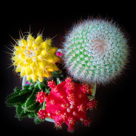 thorn tip: Close up to colorful cactus Stock Photo