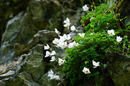 Close up view to white wildflowers