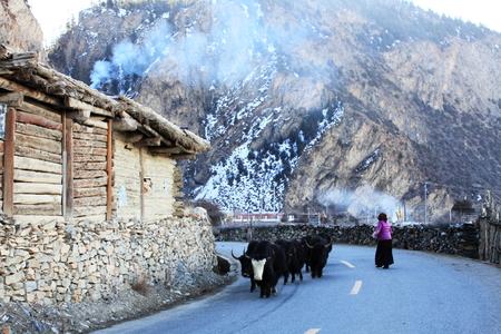 herdsman: herdsman at tibet