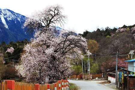 Peach blossom ditch Stock Photo