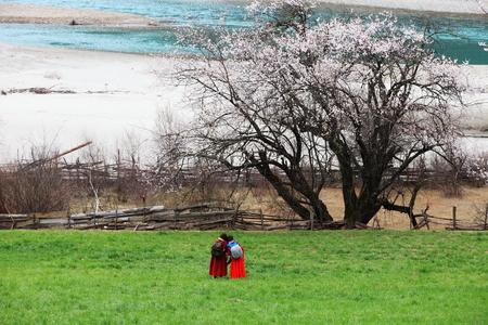 린지 복숭아 꽃 도랑 스톡 콘텐츠