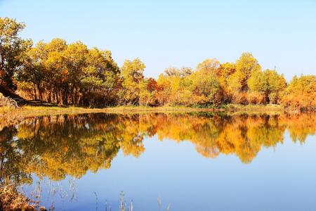 Ejina poplar landscape scenery view