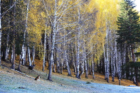 xinjiang: Nature landscape scenery view of hemu village during autumn Banque d'images