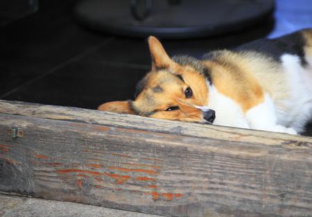 dog close up Stock Photo