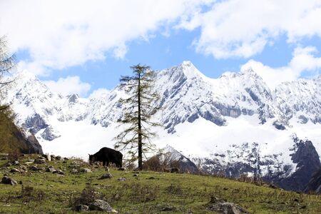 Snowy mountain scenery