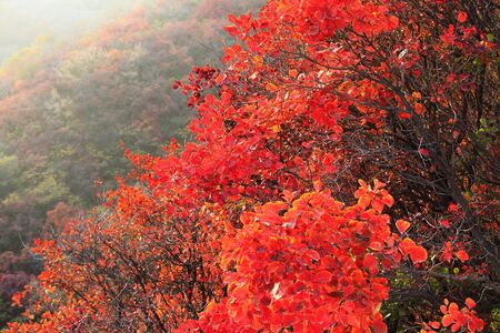 red leaf at autumn
