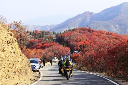 Tourists enjoy autumn along highway road
