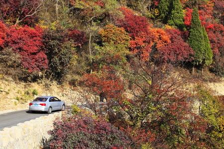 Tourists enjoy autumn along mountain highway road.