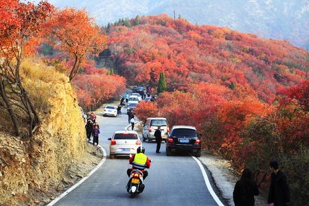 Tourists enjoy autumn along mountain road.