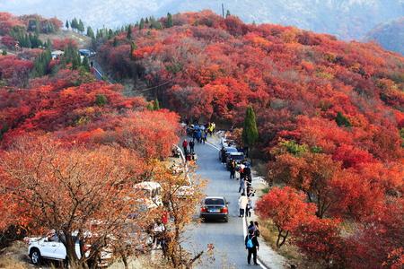 Tourists enjoy autumn along mountain highway