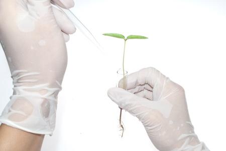 bureta: Plántulas en tubos de ensayo en la mano