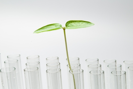 Seedling on test tube Stock Photo