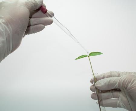 burette: Seedling on test-tube in hand
