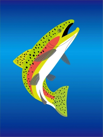 a trout Stock Vector - 20489488
