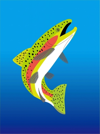 a trout  Stock Vector - 20489485