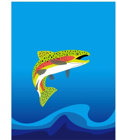 a trout Stock Vector - 20489477