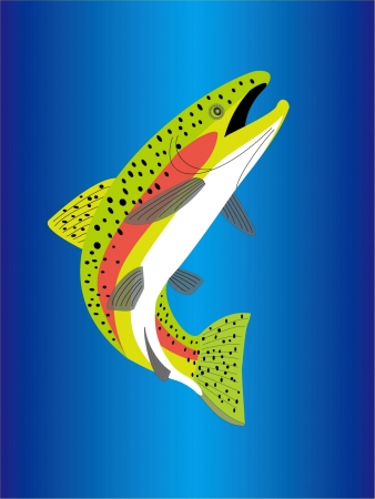 a trout  Stock Vector - 20489486