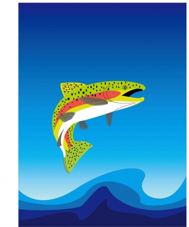 a trout Stock Vector - 20489474