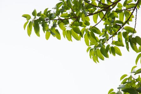 green leaf frame in white background