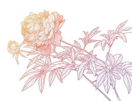 Hand-drawn simple sketch of peony flowers. Design greeting card and invitation of the wedding, birthday, Valentine's Day, mother's day and other holiday Foto de archivo