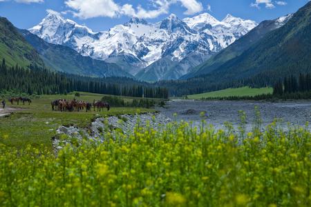 Wood Zal glacier nature scenery landscape view