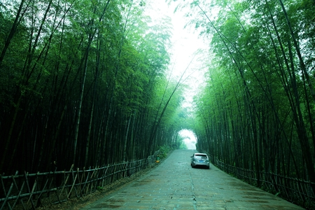 sichuan: Southern Sichuan bamboo forest