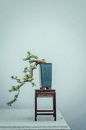 Bonsai tree on table Stock Photo