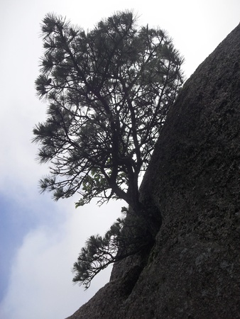 Trees growing out of rocks 写真素材