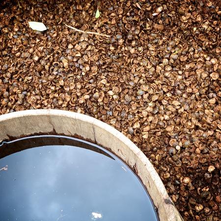 residue: Residue pecan