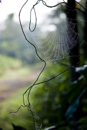 backlighting: Spider web in backlighting.