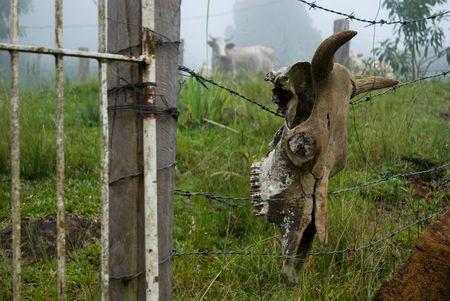 cattle wires: ...do qual ninguem escapa! Stock Photo