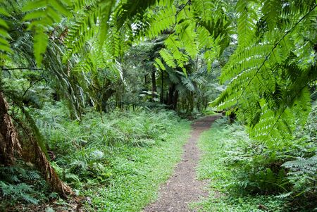 Track in the atlantic rainforest, south of Brazil. photo