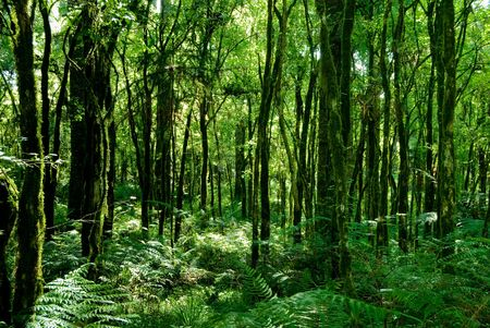 Trunks of trees with moss on brazilian atlantic rainforest.